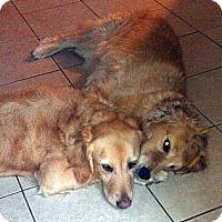 Adopt A Pet :: Vogue & Honey - Cheshire, CT