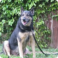 Adopt A Pet :: Cooper - Canoga Park, CA