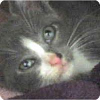 Adopt A Pet :: Monte - Island Park, NY