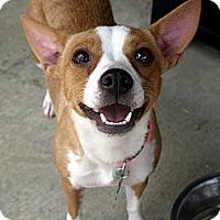 Adopt A Pet :: Athena - Baton Rouge, LA
