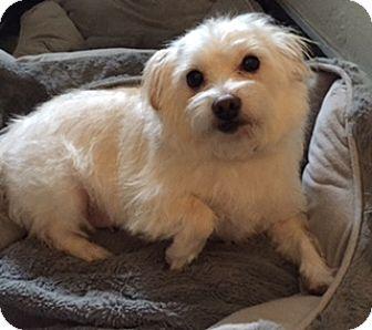 Border Terrier Mix Dog for adoption in Salt Lake City, Utah - PENNI