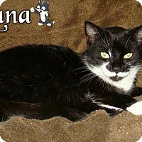 Adopt A Pet :: Luna - River Edge, NJ