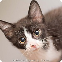 Adopt A Pet :: Colette - Fountain Hills, AZ