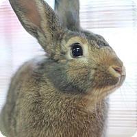 Adopt A Pet :: Mr. P - Centerville, GA