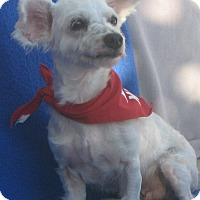 Adopt A Pet :: Lucy-WATCH MY VIDEO!!! - Irvine, CA