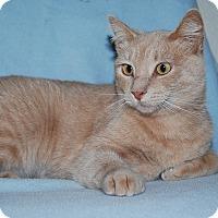 Adopt A Pet :: Tweetie - Ridgway, CO