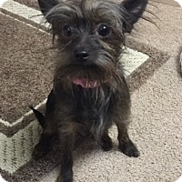 Adopt A Pet :: Sophie - Beavercreek, OH
