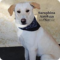 Adopt A Pet :: SARAPHINA - Conroe, TX