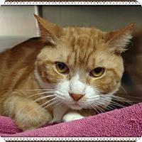 Adopt A Pet :: JEFF - Marietta, GA
