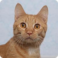 Adopt A Pet :: Alf - Chippewa Falls, WI