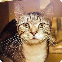 Adopt A Pet :: Kiki - Albany, NY