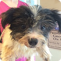 Adopt A Pet :: Babs - Oak Ridge, NJ