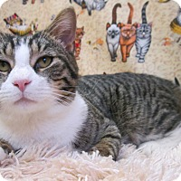 Adopt A Pet :: PAWLY - New Cumberland, WV