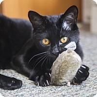 Adopt A Pet :: Dabby - Somerville, MA
