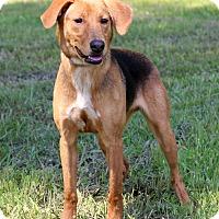 Adopt A Pet :: Allen - Waldorf, MD