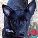 Adopt A Pet :: GRANDSTAND