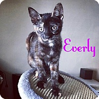 Adopt A Pet :: Everly - New York, NY