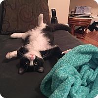 Adopt A Pet :: Teddy - Boston, MA
