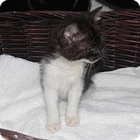 Adopt A Pet :: Jasper - Clarksville, AR