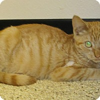 Adopt A Pet :: Bullet - Georgetown, TX