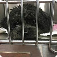 Adopt A Pet :: Ranger - Benton, LA