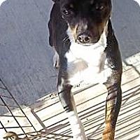 Adopt A Pet :: Simon - Temecula, CA