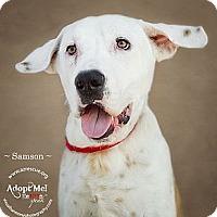 Adopt A Pet :: Samson - Phoenix, AZ