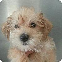 Adopt A Pet :: REBA - Silver Lake, WI