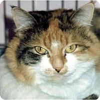 Adopt A Pet :: C.C. - Medway, MA