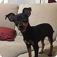 Adopt A Pet :: Tonka - Hendersonville, TN