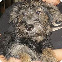 Adopt A Pet :: Edgar - Greenville, RI