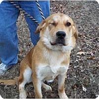 Adopt A Pet :: Rocky - Adamsville, TN