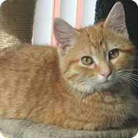Adopt A Pet :: Anchovy - Acme, PA