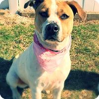 Adopt A Pet :: Bonita - Green Bay, WI