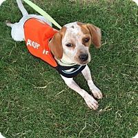 Adopt A Pet :: Hannah - Edisto Island, SC