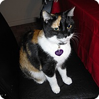 Adopt A Pet :: Marble - Toronto, ON