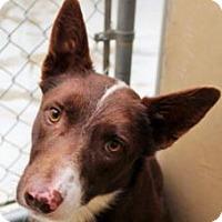 Adopt A Pet :: Smudge - Red Bluff, CA