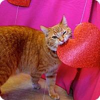 Adopt A Pet :: Sweet Pea - St. Charles, MO