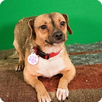 Adopt A Pet :: Smudge - Berkeley Heights, NJ