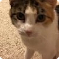 Adopt A Pet :: Vicki - Bridgeton, MO