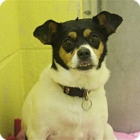 Adopt A Pet :: Mousey - Elyria, OH