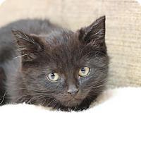 Adopt A Pet :: Broski - Midland, MI