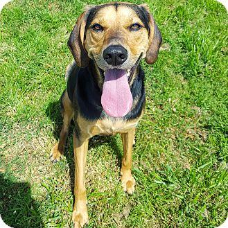 Hound (Unknown Type) Mix Dog for adoption in Little Elm, Texas - Samone