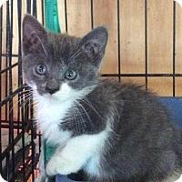 Adopt A Pet :: Jezabel - Breinigsville, PA