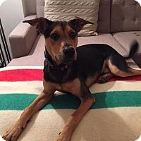 Adopt A Pet :: Hamilton - New York, NY