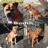Adopt A Pet :: Smith - Union City, TN