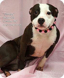 American Bulldog Mix Dog for adoption in Newnan City, Georgia - Shirley