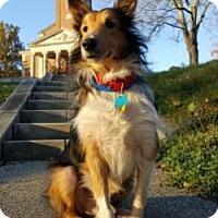 Adopt A Pet :: BUDDY - Dublin, OH