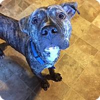 Adopt A Pet :: Campbell - oxford, NJ