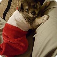 Adopt A Pet :: GLEASON - Winnipeg, MB
